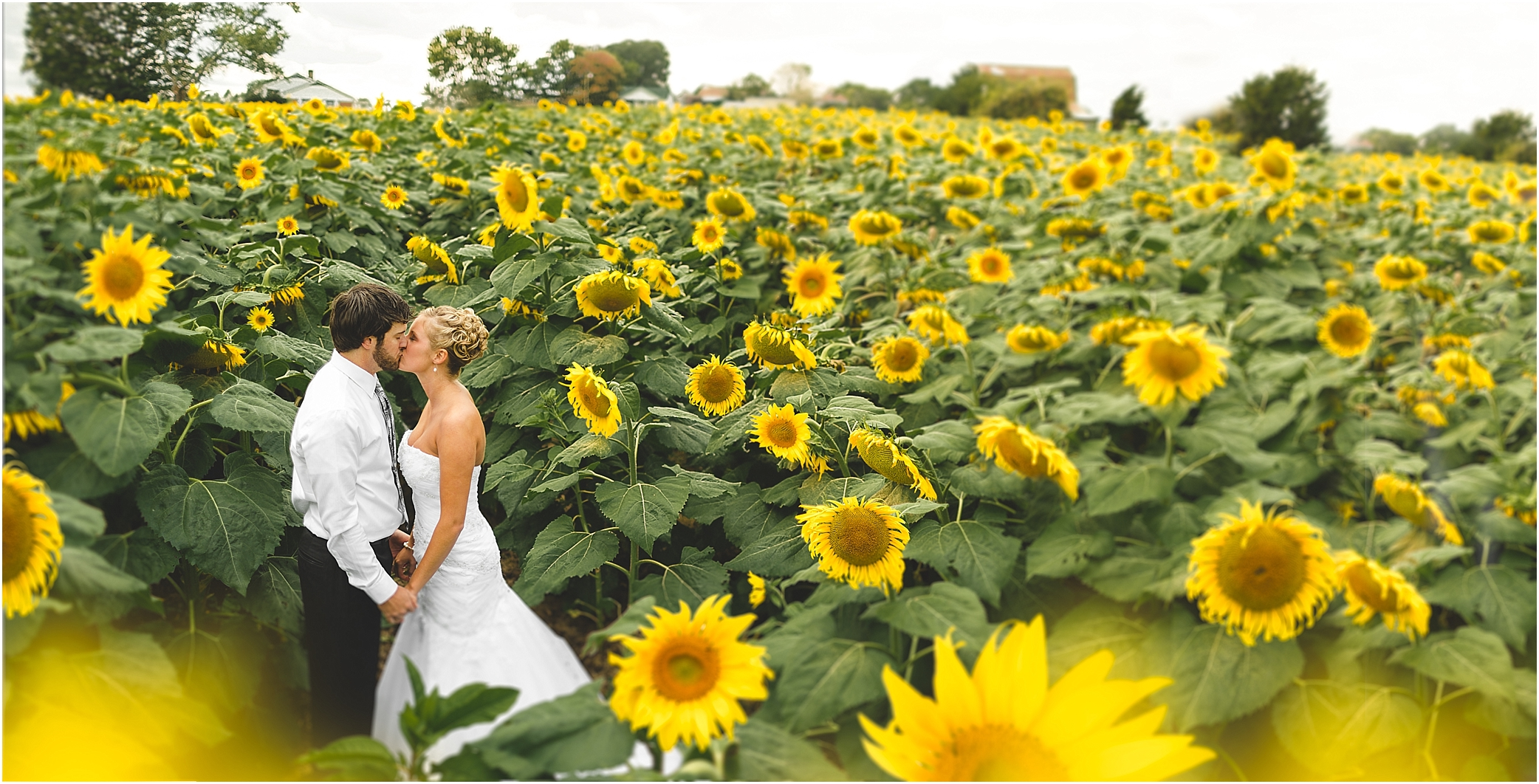sunflower field wedding photos in dandridge tn by jophoto
